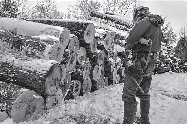 Horse Logging: It Took its Toll | Winter 2018 | Articles | Features