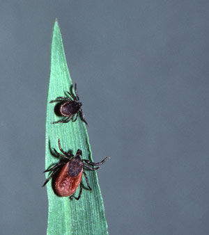 Tale of the Tick: How Lyme Disease is Expanding Northward