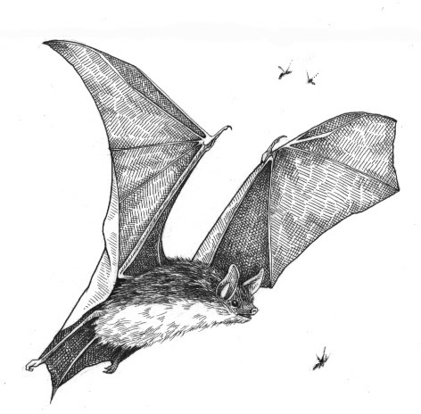 The brown bat not just a pretty face the outside story for How to draw a small bat