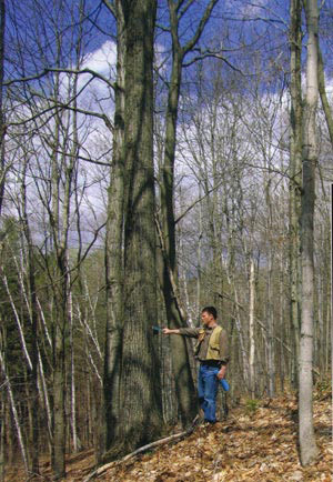 Growing Value In Your Woods Summer 2005 Articles Features