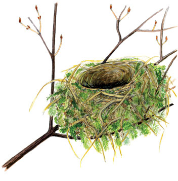 Which Bird Made That Nest Winter 2009 Articles Features