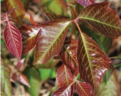 Avoiding Rash Decisions A Guide To Plants You Shouldn T