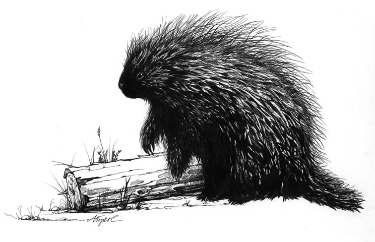 The Problem Of Porcupines The Outside Story