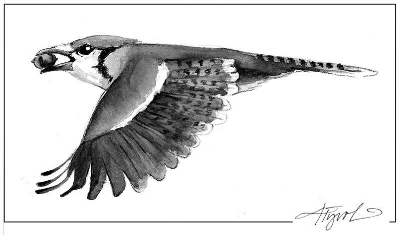 Boisterous Blue Jays Flock In Winter The Outside Story
