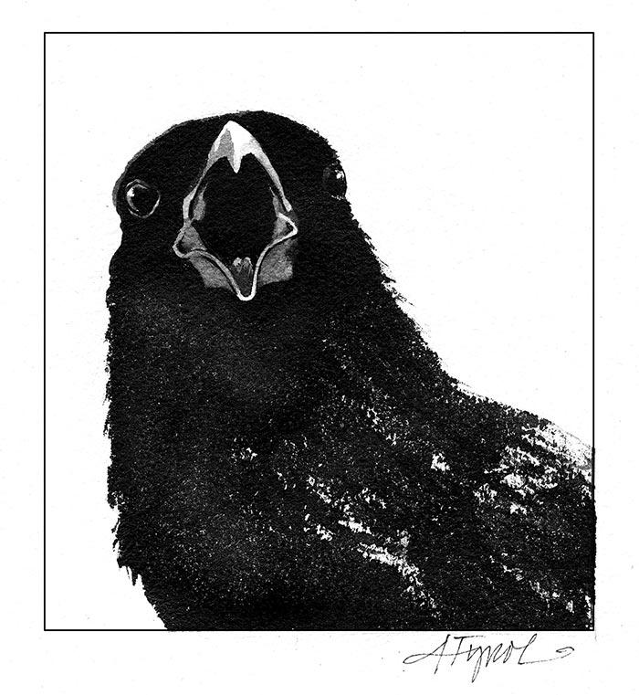 Crow Communication Is Cawfully Complicated The Outside Story