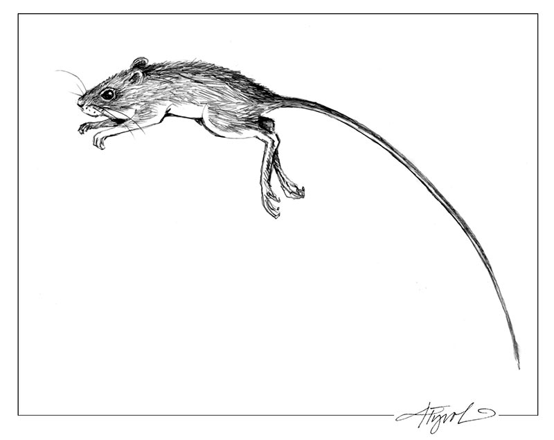 The Jumping Mouse