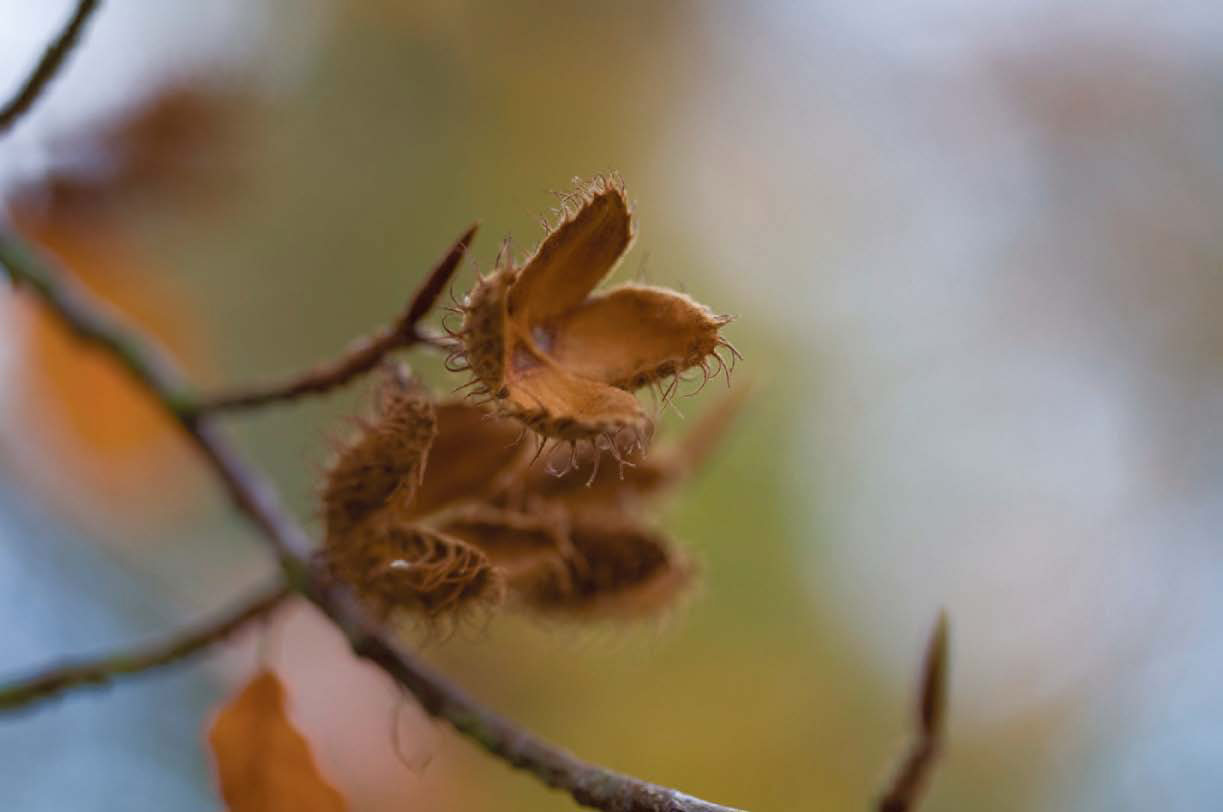 Do Stressed Trees Produce More Seeds Autumn 2011 Articles