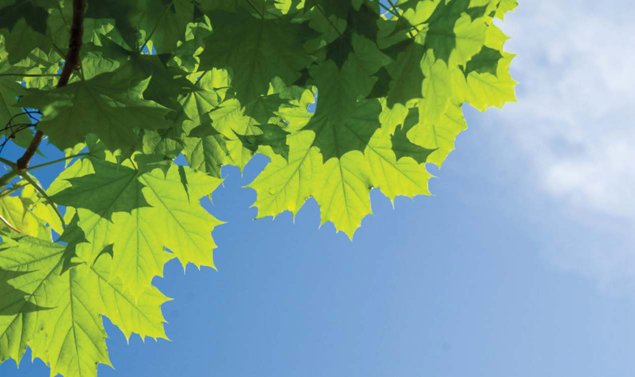 are all tree leaves the same summer 2011