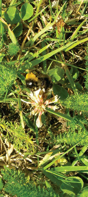 More Buzz on Pesticides and Bees