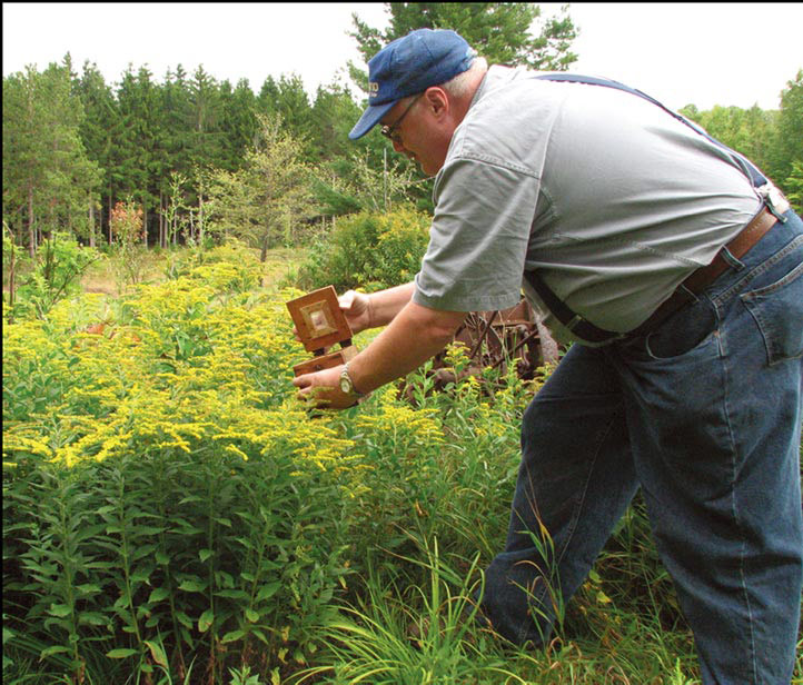 Bee Lining: The Oldtimers' Way to Find Wild Beehives | Summer 2010 | Articles| Features