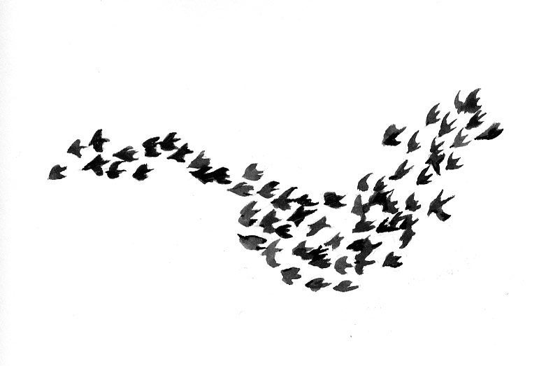 Magical Flocks of Birds | The Outside Story
