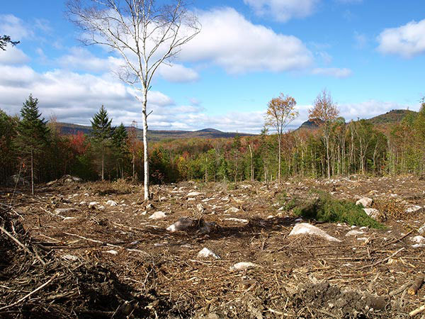 In Theory And In Practice What Makes A Good Clearcut