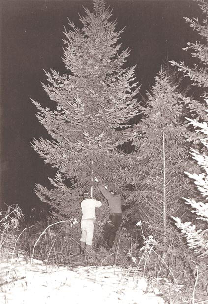 on christmas tree species and marital compromise