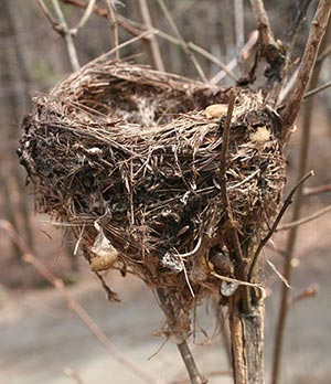 Which Bird Made That Nest? Image