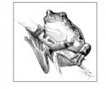 The Other Treefrog