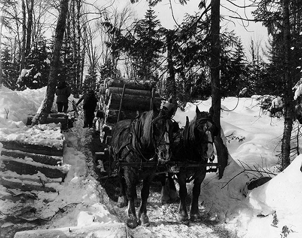 I Have Earned My Place A Logger S Year 1936 Articles