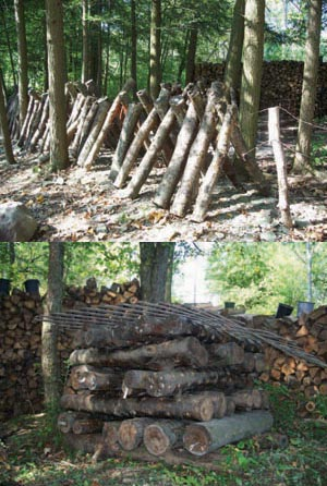 Growing Shiitake Mushrooms: Step-by-Step Guide to an