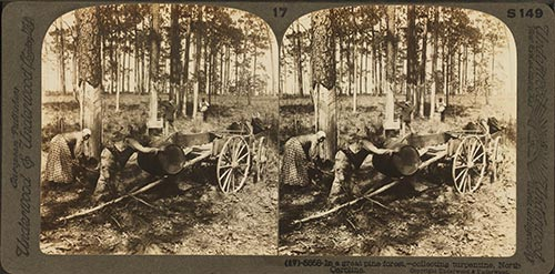 Yankee Tarheels: Remembering the Pitch Pine Industry of Colonial America Image