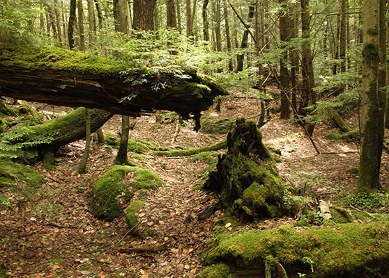 Liquidating the forests dialogue