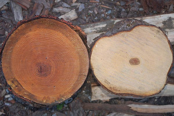 What Is The Difference Between Sapwood And Heartwood