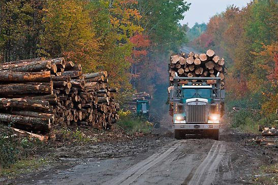 Fifty Years Of Maine Stumpage Prices Trends Surprises