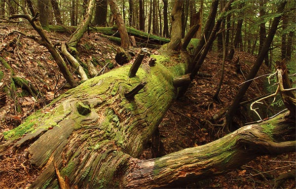 When a Tree Falls in a Forest | Knots and Bolts