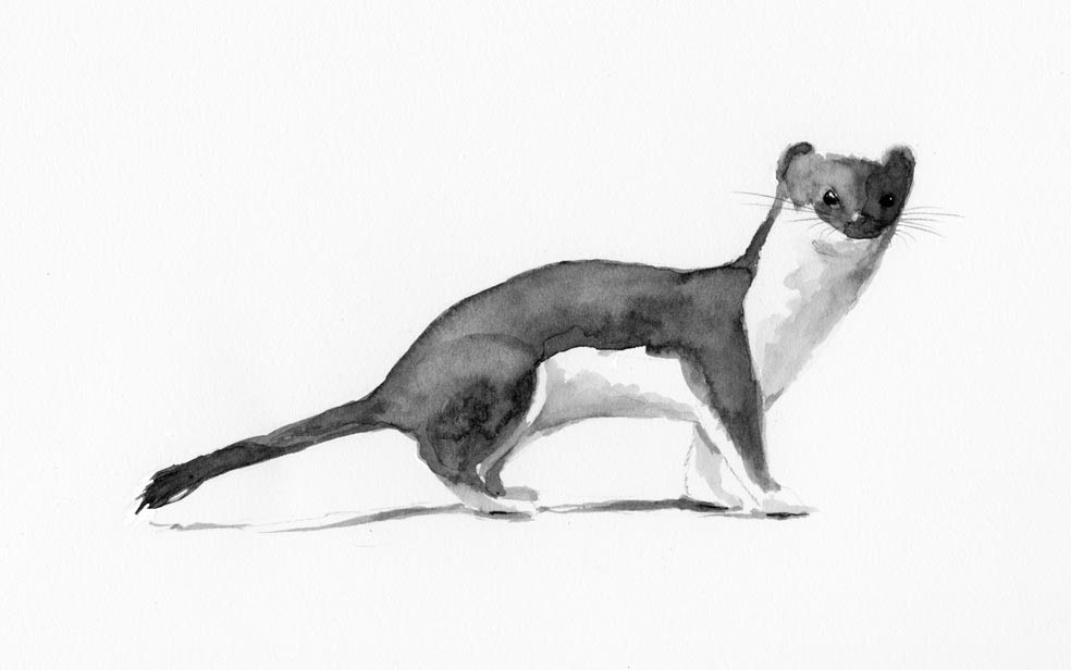 delayed implantation and other weasel like behavior the outside