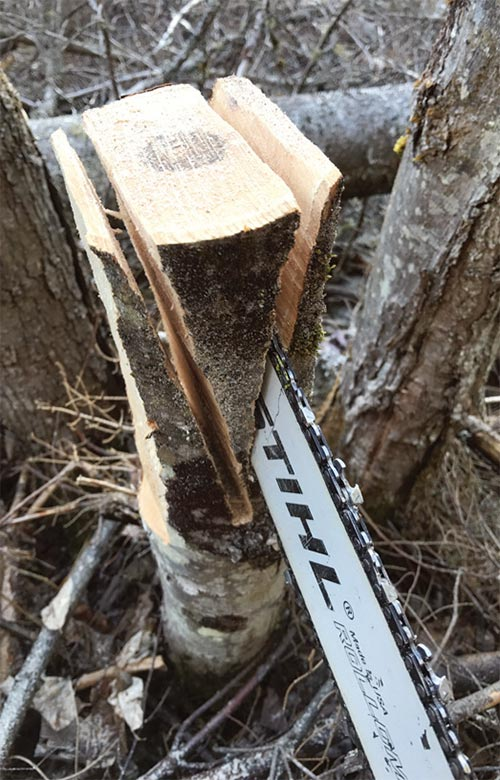 Tricks of the Trade: Wooden Felling Wedges Image