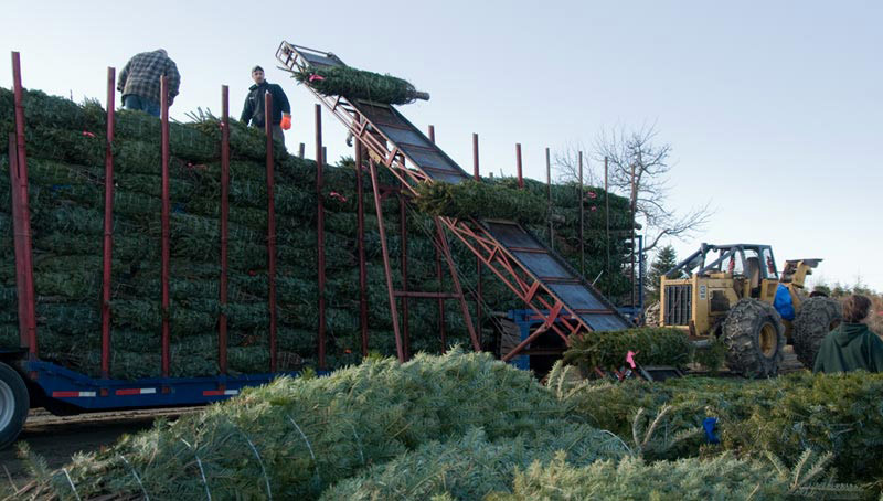 Christmas on the Farm: A How-to For Christmas Tree Growers ...