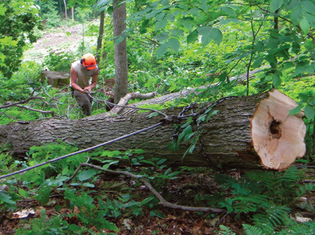 Three Logging Systems Matching Equipment To The Job