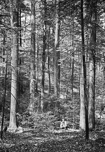 Harvard Forest: The Pisgah Forest: Harvard's Living Laboratory