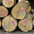 "South Williamsport, PA. ""Attempts to stop end checks on white ash logs."" Credit: Charles Schwarz"