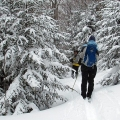 "Halifax, VT. ""Enjoying the late winter woods on the ides of March."" Credit: Diana Todd"