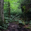 Gale River Trail, White Mountains, NH: A storybook view of the forest understory. Credit: Mena Schmid