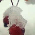 "East Corinth, VT. ""Frozen crabapple."" Credit: Jamie Pierson"