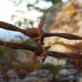 "Dalton, NH. ""Old barbed wire on older stone wall catching the sunset."" Credit:  AM Dannis"