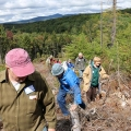 "Wilmington, VT. ""The Windham Regional Woodlands Association tours a recent timber harvest at Molly Stark State Park."" Credit: Diana Todd"