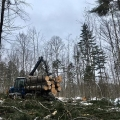 "Reading, VT. ""A beautiful forwarder load of white pine headed for the landing. To see a neat video clip of this, check it out here on Facebook: https://www.facebook.com/longviewforest/videos/205522897027184/"" Credit: Alex Barrett"