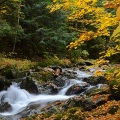 "Green Mountain National Forest, Vermont: ""White River on a beautiful overcast Fall day which really makes the colors pop.""  Credit: Ken Hatch"