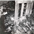 Fresh hides await processing. Photo: The Jones Township Historical Interest Group Collection