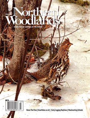 Issue 95: Winter 2017
