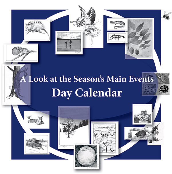 Calendar Woodlands : Season s main events day calendar books clothing and