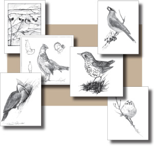 The Outside Story Birds Note Cards